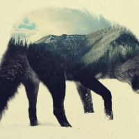 Lobo estepario vs hombre burgués