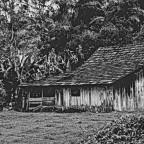 Thoreau y la profanación mental